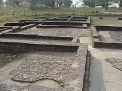 Pipurawa_0131